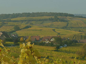 Related Classic | Alsace Route du Vin | Self Guided