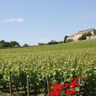 Wine Regions: Burgundy
