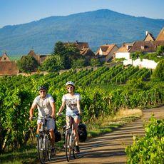 Biking through Vineyards