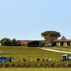 Working Vineyards