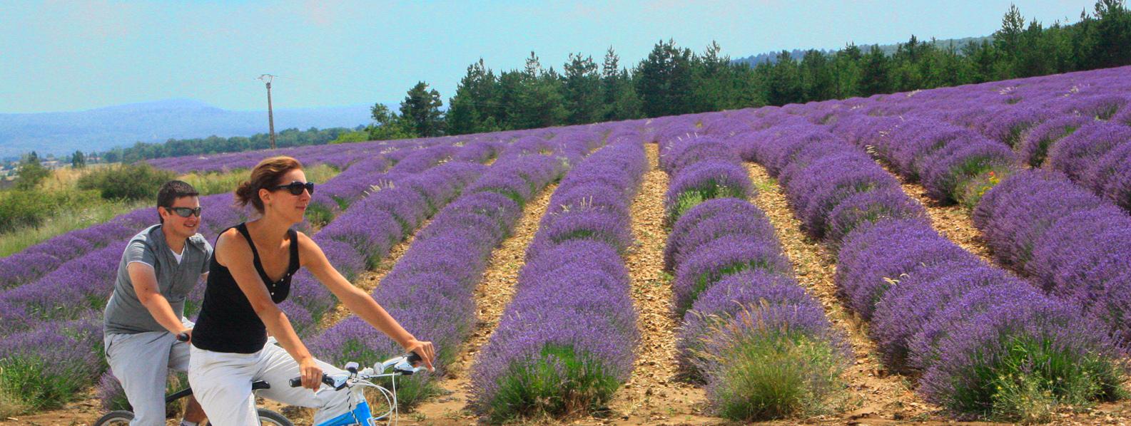 Provence cycling road