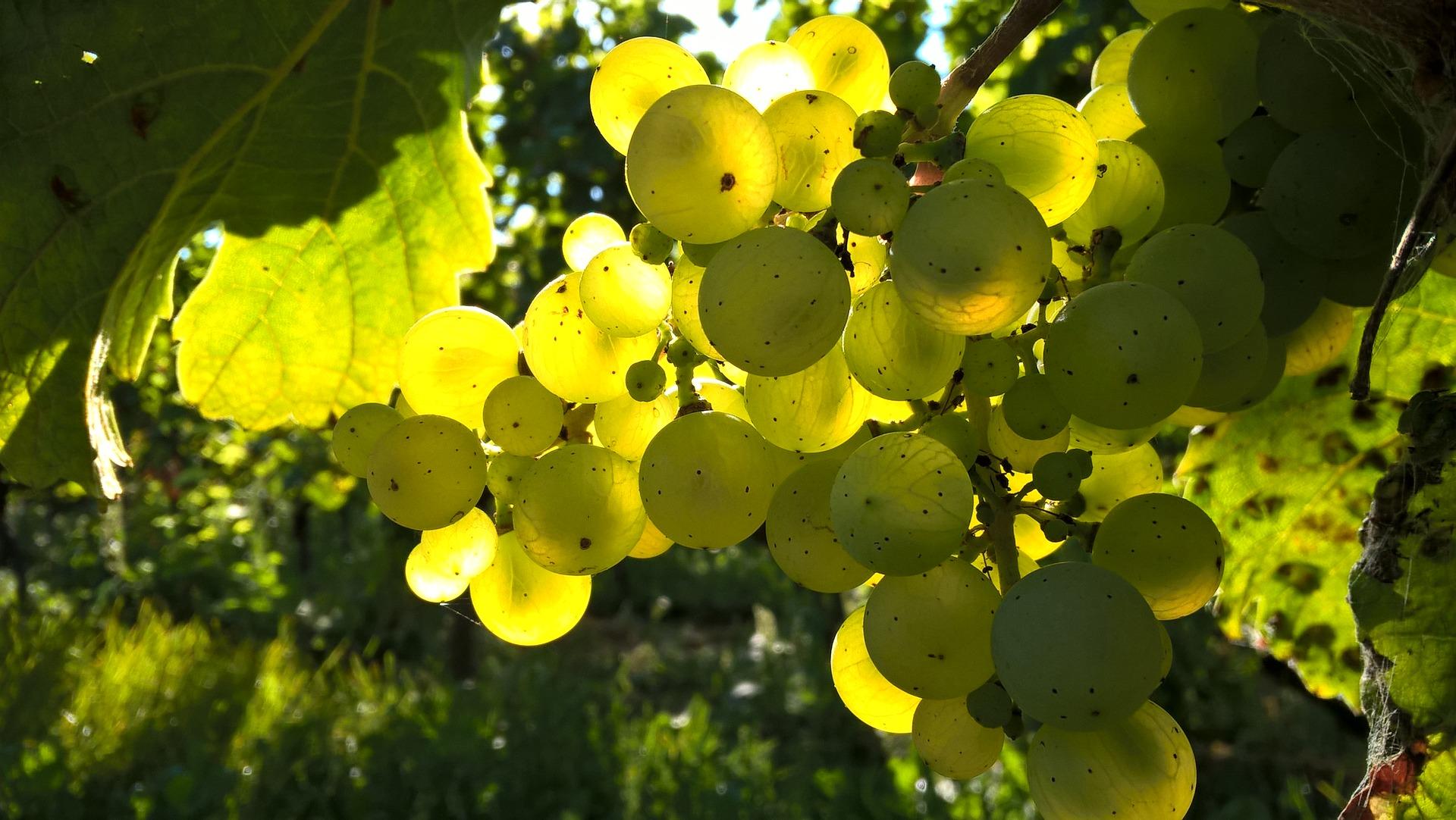 alsace-white-wine