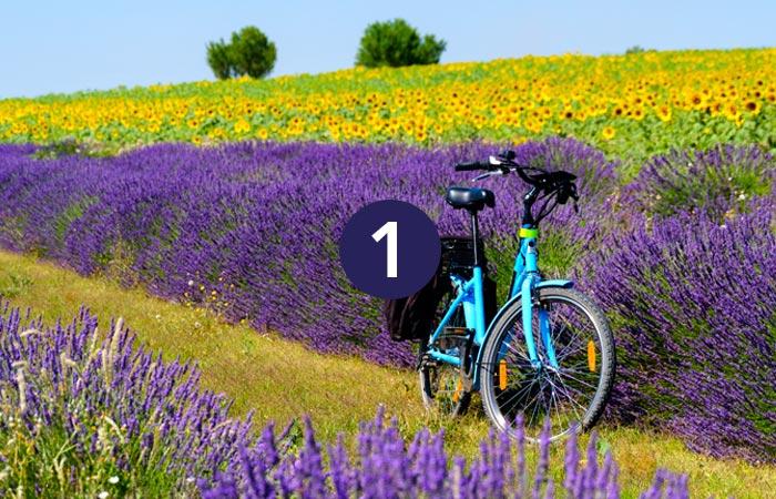 1. Provence