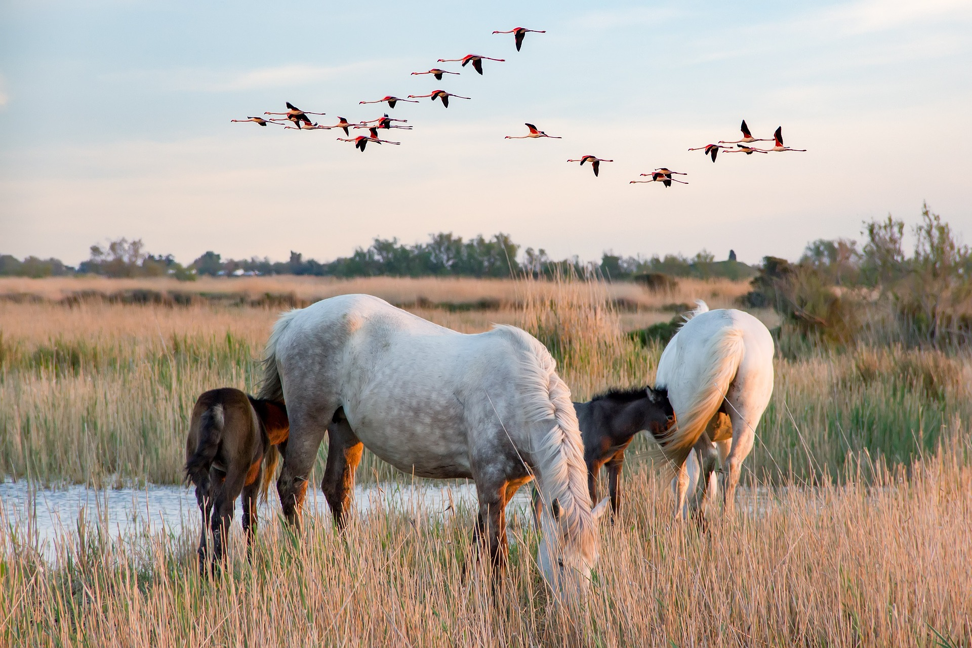 Camargue nature reserve Provence