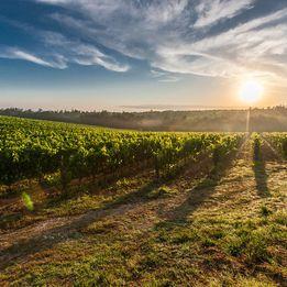 Tuscany & Umbria Single Centre | Gianna's Village Agriturismo