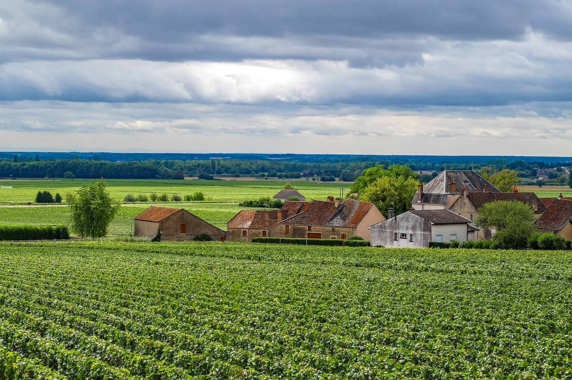 burgundy-vineyard