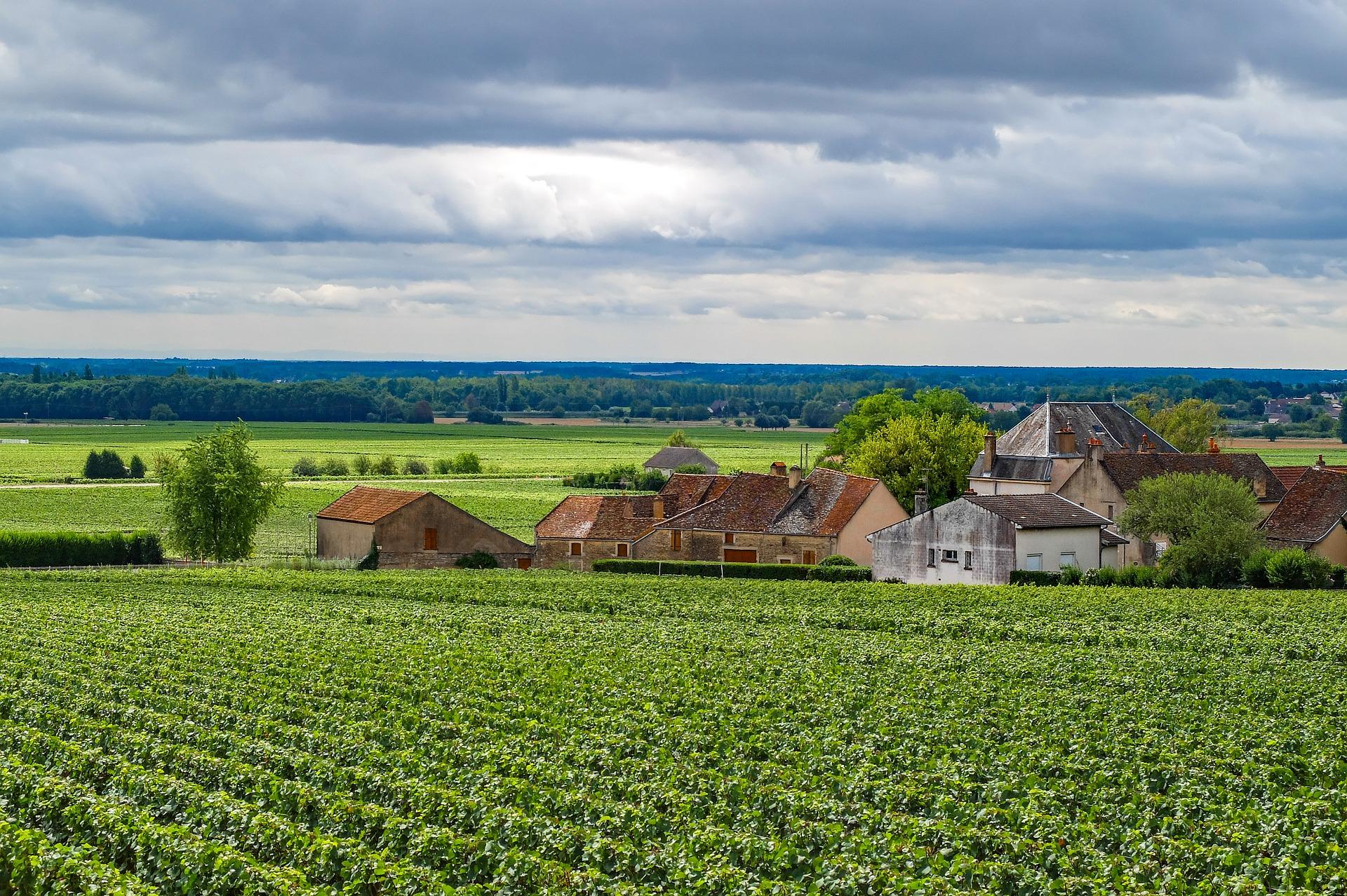 burgundy-vineyard