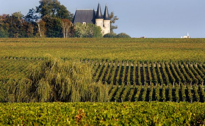 bordeaux-vineyards