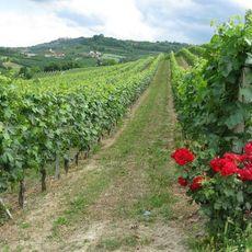 Emilia Romagna Villages and Roses